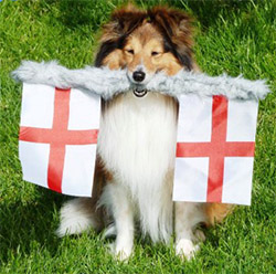 StGeorge-dog